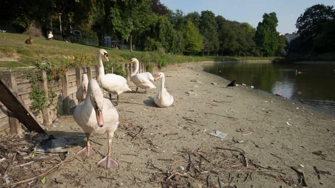 Stadspark krijgt make-over: Antwerps bestuur selecteert ontwerpteam