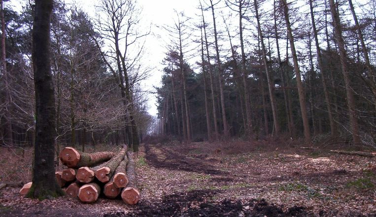 De boskap in natuurgebied De Gulke Putten, dan wel op initiatief van Natuurpunt, leidde in 2011 al eens tot protest in Wingene.