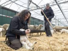 Heideboerderij Haarle: 'Een prachtige, nieuwe toeristische attractie'