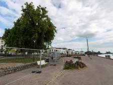 Angst voor nog een vallende tak op voorbijganger, Zutphen kapt iconische boom langs IJsselkade