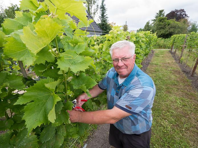 Peter Kramer in zijn wijngaard.