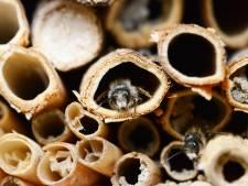 Dag tegels, hallo insectenhotel: 'Die beestjes zijn beter voor ons dan je denkt'
