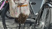 VIDEO. Duizenden bijen nestelen op fietstassen aan winkelcentrum K in Kortrijk