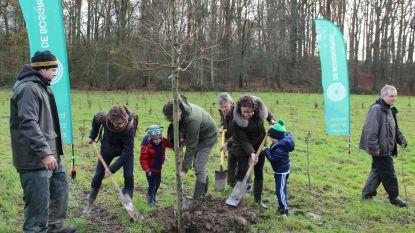 Oost-Vlaamse Bosgroepen planten samen met vrijwilligers 2.000 bomen om private boseigenaars te bedanken