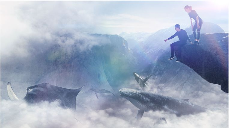 The Park Virtual Reality