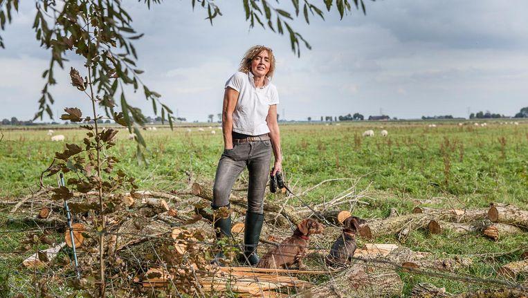 Hilde Huizenga op het land van de familie, waar tot twee jaar geleden nog bomen stonden die met een subsidieregeling waren gepoot. Het hout op de voorgrond is afkomstig van eerdere stormschade. Beeld Harry Cock/de Volkskrant