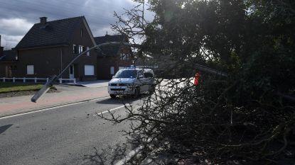 UPDATE STORM Telefoon staat roodgloeiend bij noodcentrale in Vlaams-Brabant: brandweer Leuven kreeg al meer dan 260 oproepen voor stormschade