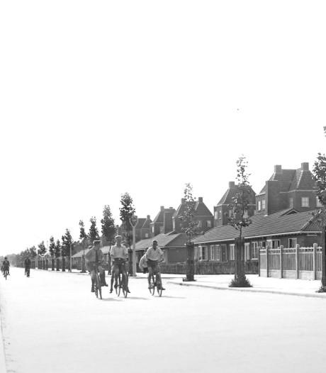 De platanen in Dordrecht zijn de straatjongens van de stad