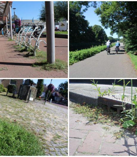 Groen op ongewenste plekken stuit Dorpsraad Wapenveld tegen de borst: 'Het ziet er niet uit'