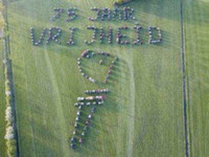 Ode aan de vrijheid in het weiland van agrariër Thijs Wieggers in Mariënvelde.