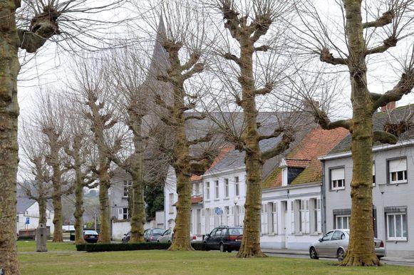 De platanen van het Enameplein zijn beschermd.