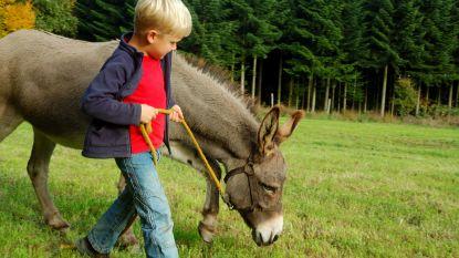 Aantal zorgboerderijen op tien jaar tijd verdrievoudigd