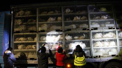 Dierenactivisten houden 'kalkoenwake' aan Volys in Lendelede