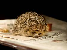 PvdD wil diersoorten van Overijsselse vrijstellingslijst