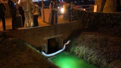 Brugge, waar het water plots groen kleurt