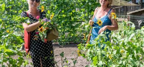 Het veelzijdige boerenleven op Hoeve Ravenstein in Baarn: 'Vlees zoals de natuur het bedoeld heeft'