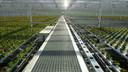De Nederlandse tuinbouwsector krijgt volop lof in de nieuwe film van David Attenborough.