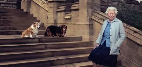 Triste fin d'année pour Elizabeth II: elle a dit adieu à l'un de ses fidèles compagnons