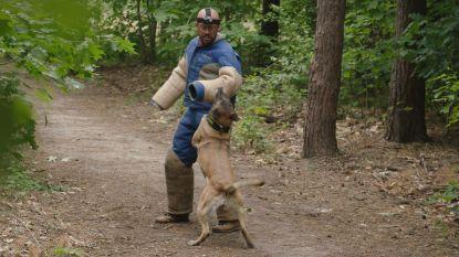 Staf Coppens helpt honden aan de leiband te houden
