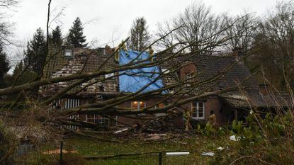 Boom waait op huis in Overijse