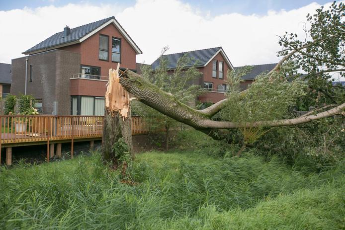De gebroken boom aan de Frankentaler in Huissen.