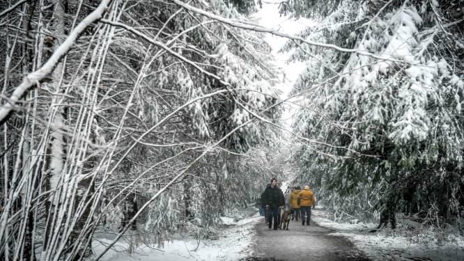 Na de overrompeling van vandaag: politie roept op om morgen niet naar Hoge Venen af te zakken voor de sneeuw