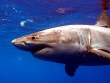 Zwemverbod verlengd na dodelijke haaienaanval Sint-Maarten
