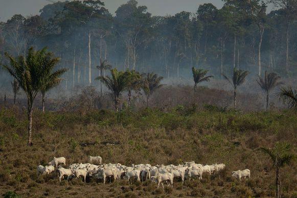 In het Amazonewoud zijn dit jaar uitzonderlijk veel bosbranden uitgebroken.