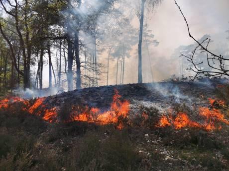Vier hectare bos verloren gegaan door brand Soester Duinen