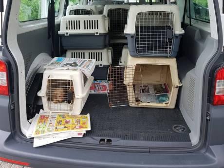 Uitstel voor Woerdense teckelfokkers om adequate huisvesting voor honden
