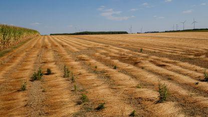 Droogte van afgelopen zomer erkend als landbouwramp