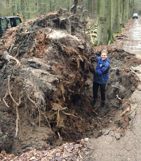 'Het is dramatisch in de bossen': duizenden bomen legden bij storm het loodje