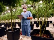 Le cannabis thérapeutique pourra être coté à la Bourse de Londres