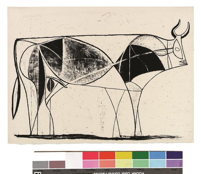 Beauty is a line,  Stier van Picasso.  Picassomuseum Münster