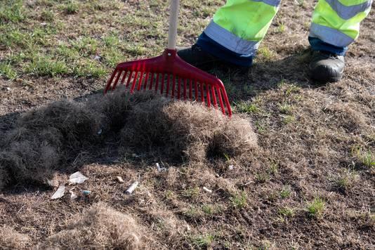 Medewerkers van Dar maken het gras op de Waalkade met harken schoon.