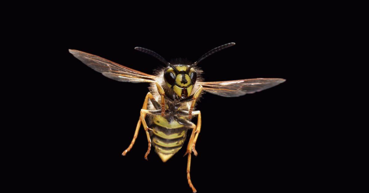 Een wereld zonder insecten is geen droom maar een nachtmerrie