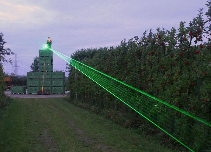 Ganzen verjagen met laser, het lijkt te werken.