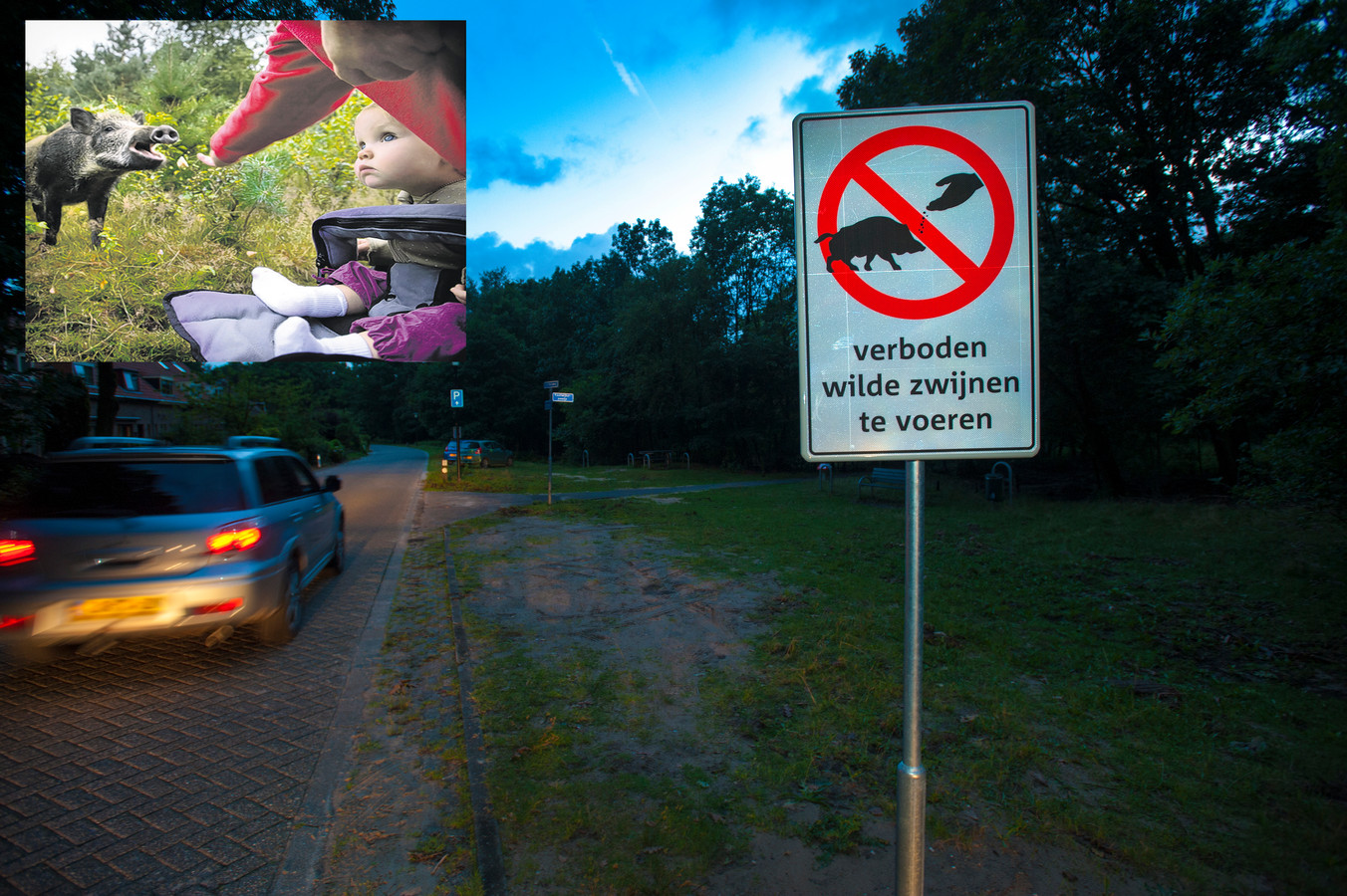 Verboden zwijnen te voeren! Een bord bij Radio Kootwijk is duidelijk. Inzet: de aanwezigheid van een kind is geen beletsel voor het voeren van een wild zwijn (archieffoto).