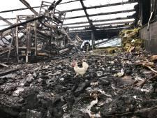 Boer Verbeek ziet 12.000 van zijn kippen verbranden: 'Het waren goede kippen die we nog niet lang hadden'