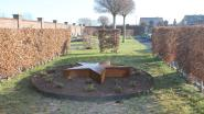 Begraafplaats van Pepingen heeft sterretjesweide