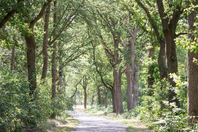 Een flink stuk bosgrond in Nijverdal wordt volgende week gedwongen geveild.