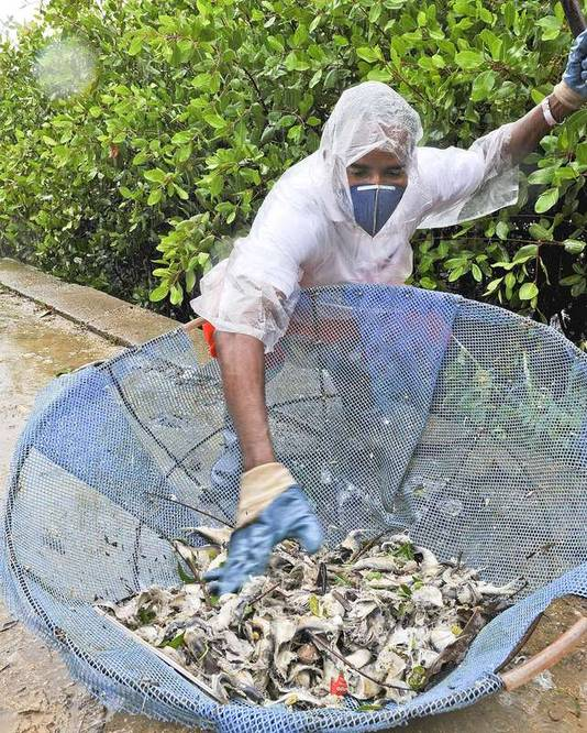 Pour tenter de combattre l'odeur nauséabonde, les équipes municipales lavent également la piste cyclable qui entoure le lac avec des produits désinfectants.