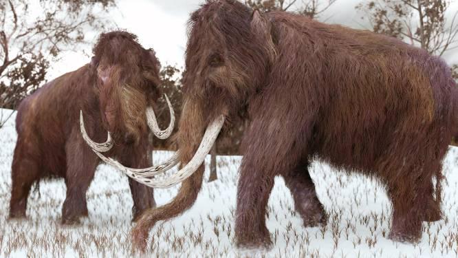DNA-onderzoek toont aan waarom laatste wolharige mammoeten uitstierven