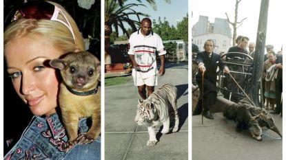 Een witte tijger, rolstaartbeer of miereneter: deze celebrities hebben de vreemdste huisdieren
