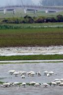 De Biesbosch trekt veel watervogels aan.
