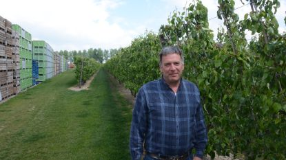 """Opluchting bij fruittelers en tuinbouwers, seizoensarbeiders mogen opnieuw overkomen als ze getest zijn: """"Huidige ploeg in quarantaine gezet in het bedrijf"""""""