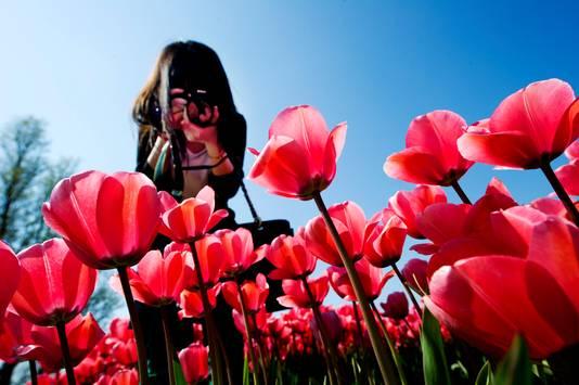 Een toeriste zet de bloemenvelden in Lisse op de foto.