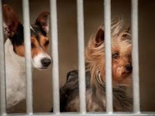 Extra regels voor hondenpension zijn weer van tafel