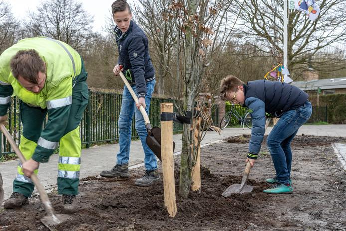 Jakob Timmers (m) en Rowan Verhage planten  ter gelegenheid van boomplantdag samen met hun klasgenoten van De Morgenster zuilvormige eiken en amberbomen in de Vloedstraat in Kerkwerve.