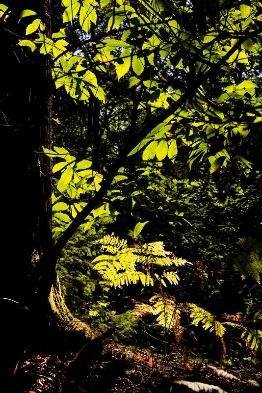 Richard Gouw uit Westervoort ging wandelen in het Bergherbos, waar de zon mooi door het gebladerte scheen.